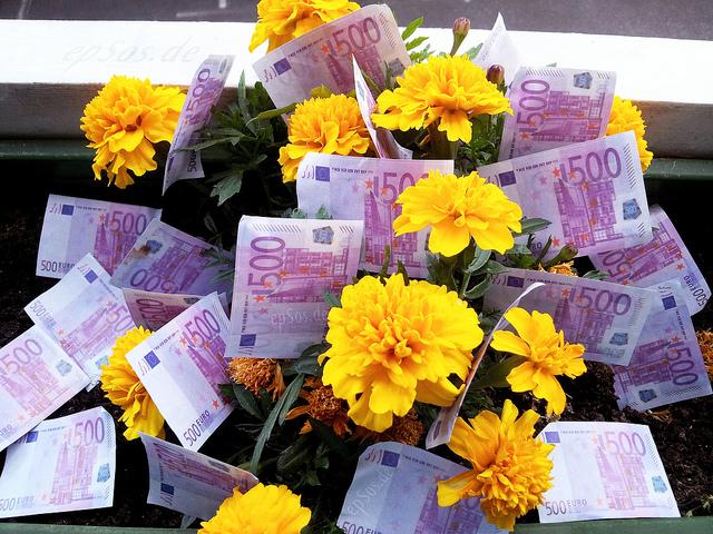 flori pentru bani